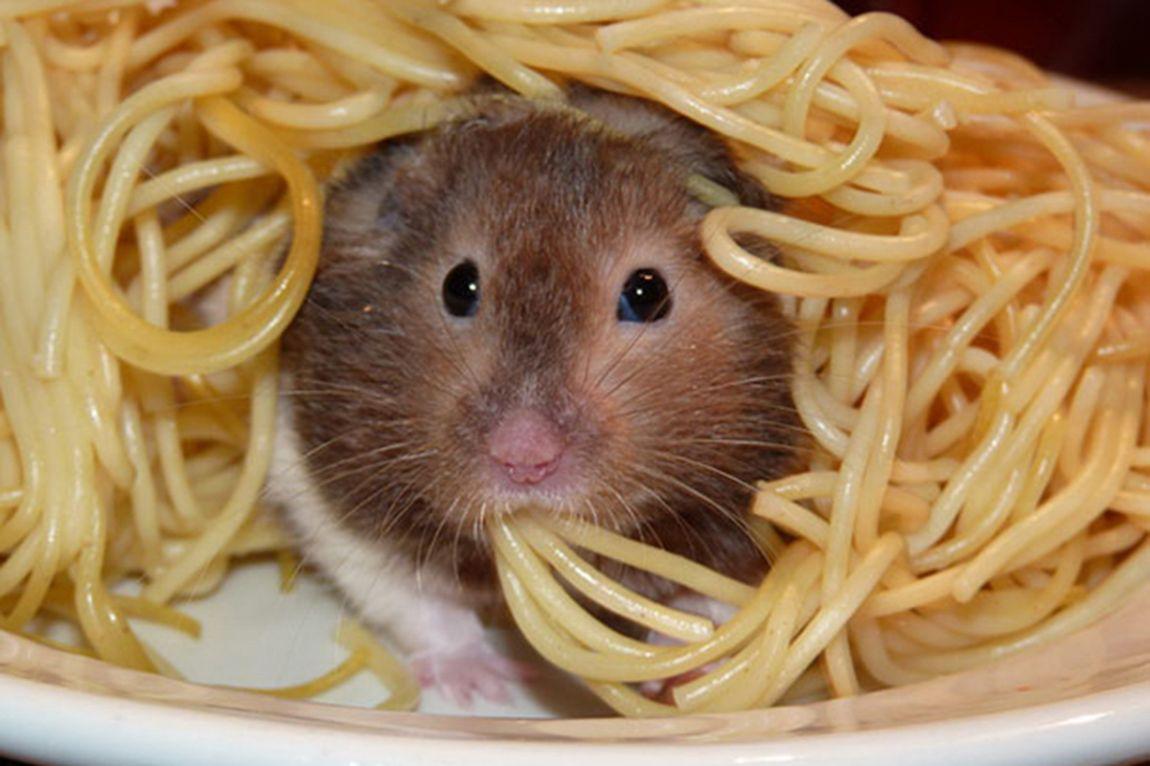 Matérias Estranhas: Limites Permitidos em Alimentos