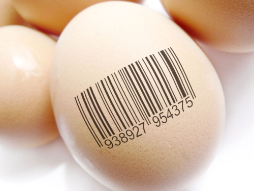 Paradigma do sistema agroalimentar: vamos falar de rastreabilidade!