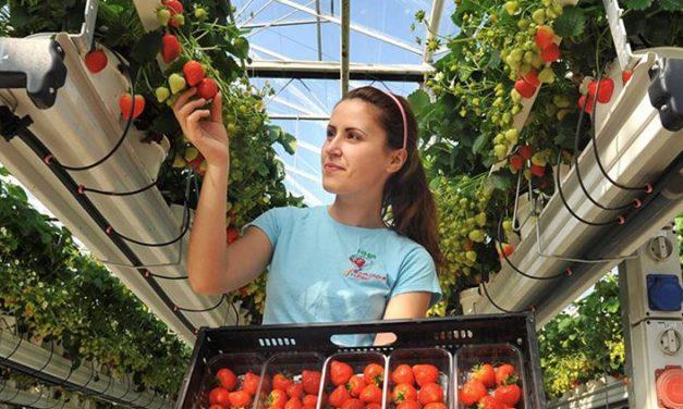 Como Escolher Fornecedores de Alimentos?